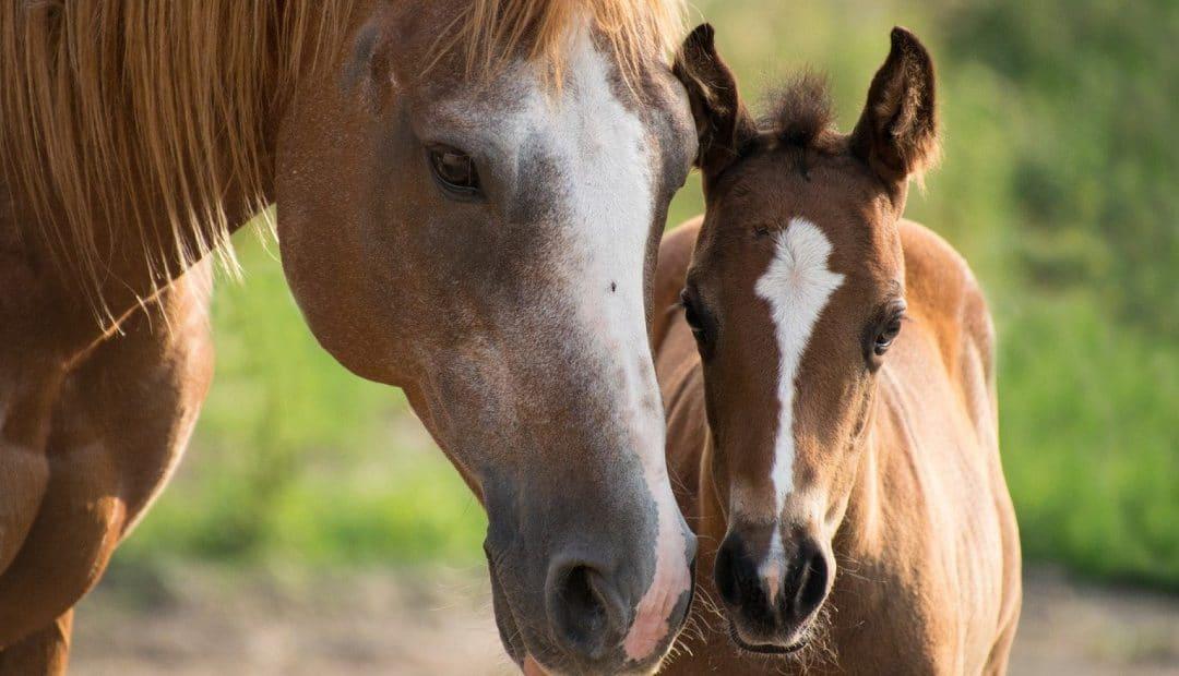 Un stage d'équitation pendant les vacances, ça ne tenterait pas votre enfant ?