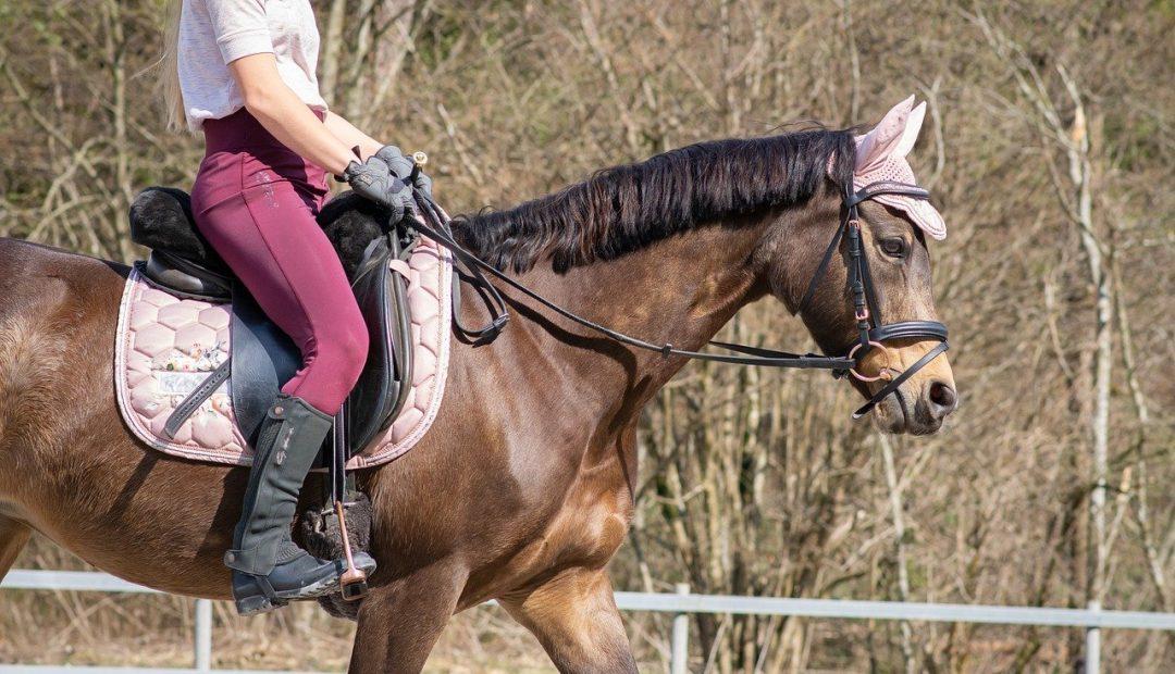 Bien choisir sa selle de cheval pour jumping