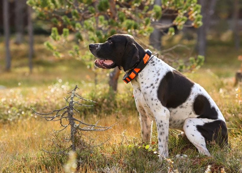Quels sont les avantages du collier GPS sans abonnement pour chien